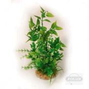 Διακοσμητικά Φυτά