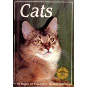 Βιβλία για Γάτες