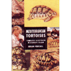 TORTOISES -MEDITERRANIAN-